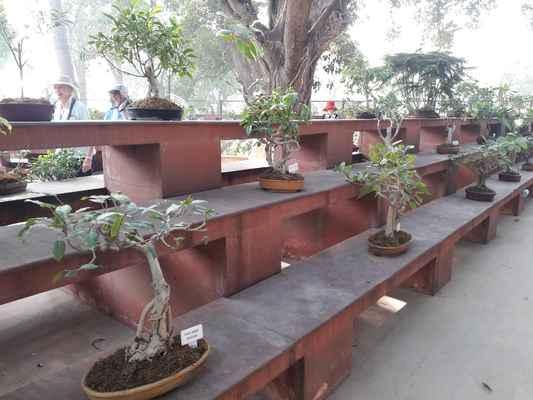Expozice bonsai. Prý jedna z nejhezčích v Indii. No nebudeme jim to vyvracet.