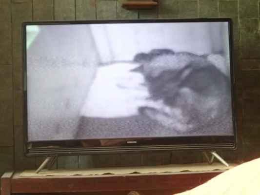 Po přijezdu domů je i se štěndy na monitoru v porodně.