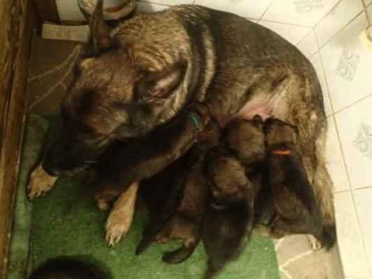 Máma ještě kojí vleže. V úterý jim budou 4 týdny a budou mít kolem 2kg, někteří i víc.