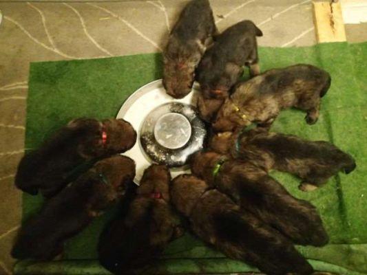 Všichni se tam zatím vejdou. A vypadají hodně vyrovnaně. Dvě štěnda jsou trochu větší a dvě trochu menší.  Zbytek je skoro stejný.