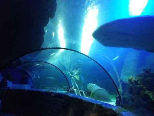 Prosklený tunel v mořském světě v Portu - Naprosto úžasný výhled na obrovské akvárium plné překrásných tvorů