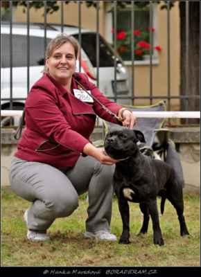 Keep Up With Domidar Dogs (Glimmer Man Domidar Dogs X Grinning Devils Domidar go Ballistic) - Psi - třída vítězů - V1, CAC, BOS