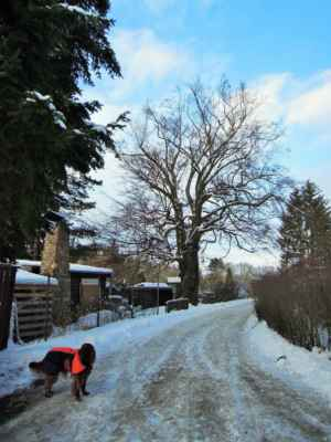 památný strom - Buk u Harta v Drahovicích - Obvod kmene: 534cm, výška: 16,5m