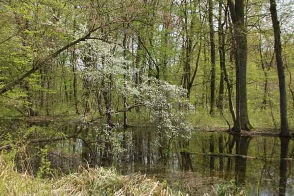 Krása lužního lesa - Jedno ze slepých ramen