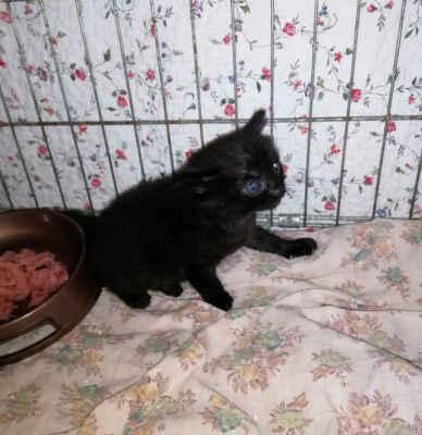 9.6.2021 - Oznamovatelka z Prušánek nám nahlásila, že její dcera našla po cestě ze školy lepenkovou krabici s dvěma koťaty. Jsou velmi vyhladovělá a vystrašená, měla by být ještě u kočičí mámy. Jsou to dva kocourci, zrzavý Jeníček a černý Venoušek.   PROČ TO LIDÉ DĚLÁTE? Proč se zbavujete koťat své kočky předčasně a tímto způsobem? Opuštění zvířete je trestným činem. Neslyšeli jste o kastraci? Vaše kočka vám letos ještě jednou porodí, zase koťata vyhodíte?