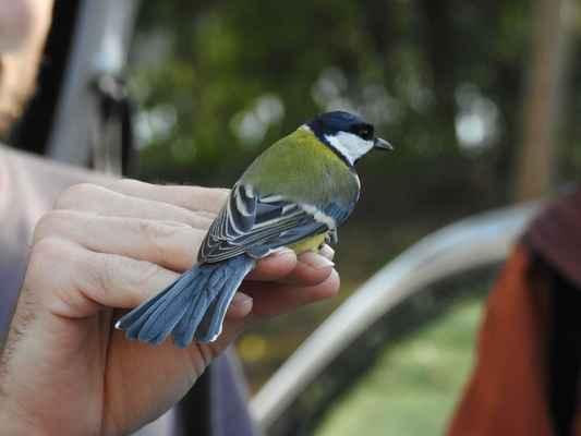 pěkné ptáky