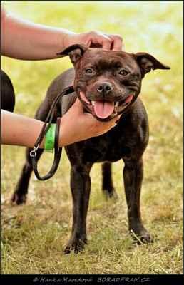 Ebbi Fantastic Fay Bohutín (Forever First Domidar Dogs X Athena Domidar Dogs) - Feny - třída mladých - V