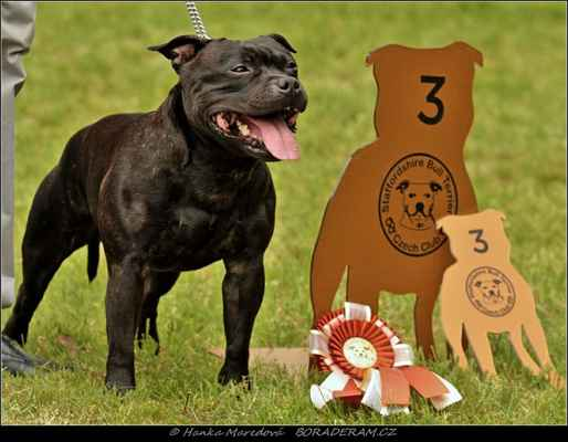 Forever First Domidar Dogs (Breno Domidar Dogs X Beretta Domidar z Hambalek Bušín) - Psi - třída vítězů - V3