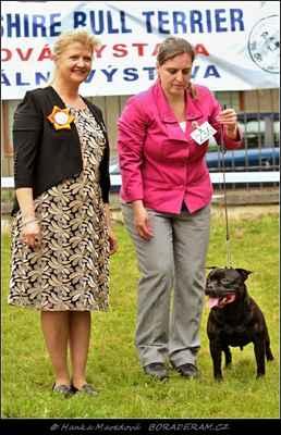 Glimmer Man Domidar Dogs (Breno Domidar Dogs X Maya Stawka Wieksza Niz Zycie) - Psi - třída vítězů - V1, CAC