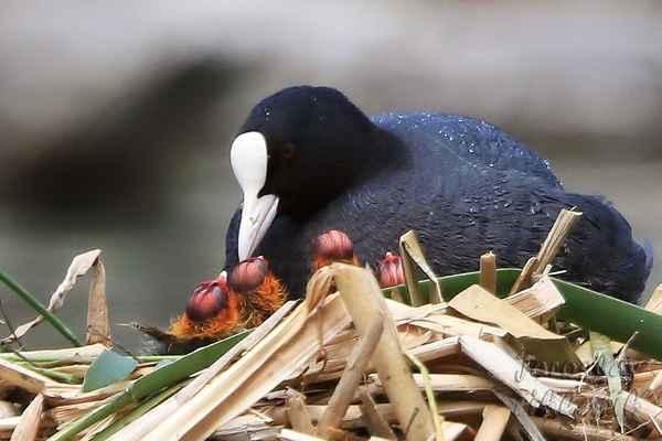Maminka vypráví pohádku a děti zaujatě poslouchají? Ne, ne, ne, ve zvířecím světě vše se točí kolem potravy.