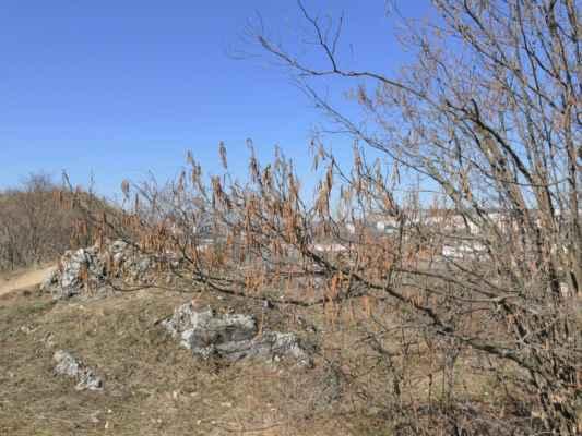 ... už je tu více keřů a stromů ....