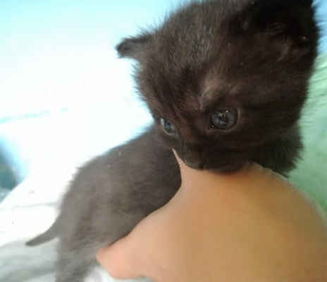5.6.2020 - Dnes další koťata nalezena na polní cestě v Lanžhotě! Jsou to opět dvě černé kočičky - Selma a Petty. Koťata mají 4 - 5 týdnů a ještě by měla být u kočíčí mámy. Toto je důsledek nezodpovědnosti majitelů, kteří nekastrují své kočky a pak se jich zbavují takovým způsobem.