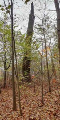 Uschnięte drzewo nadal jest przydatne. - Jedyny lampion (A) punktu nr 4, w prawidłowym miejscu.