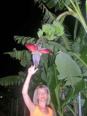 To se někdo má, když mu rostou na zahradě banány.