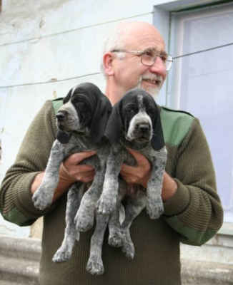Pan chovatel! Po celou dobu, kdy choval auvergnéské ohaře, byli psi pana Hanáčka typickými představiteli plemene. To je krásně vidět na hlavičkách těchto dvou štěňátek.