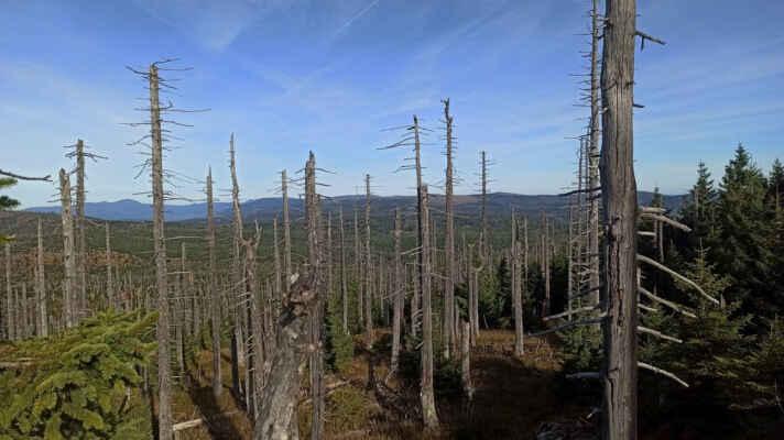 .. k Javoru a Poledníku. Než popadají staré pahýly, zarostou zdá se výhledy mladým lesem