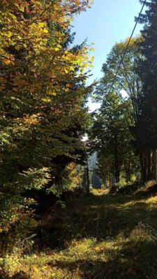 barvy podzimu u lanovky v Českých Žlebech (9.10.)