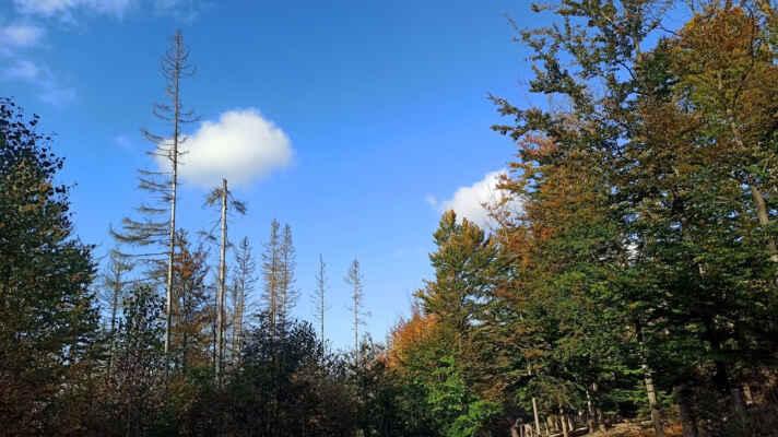 Les na Radvanovickém hřbetu se také pěkně barví :)