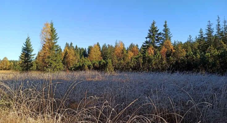Podzimní rašeliniště u Časté