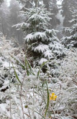 s výškou sníh přibývá