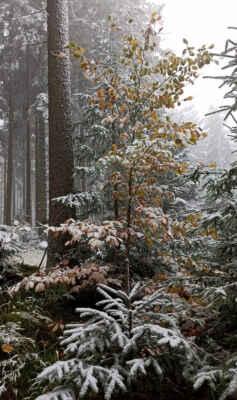 na rozhraní podzim / zima
