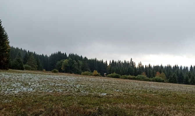 13. října přes Bázumské louky na Boubín,  na trávě první plíseň podzimu