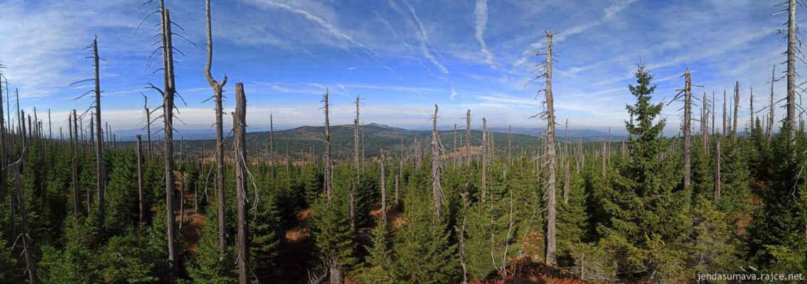 Les se na hřebenu Šumavy obnovuje nebývale rychle