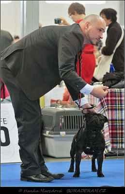 Hold Me Back Domidar Dogs (Decimus Prime Domidar Dogs X Maya Stawka Wieksza niz Zycie) - Mezitřída - psi - známka: výborný 1, CAC, CACIB, BOB