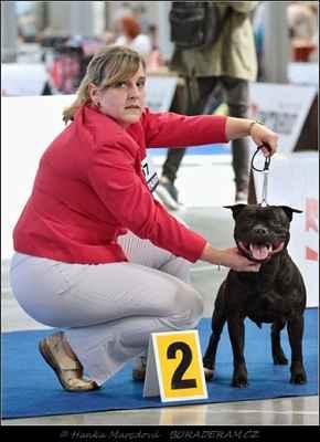 Glimmer Man Domidar Dogs (Breno Domidar Dogs X Maya Stawk Wieksza Niz Zycie) - Třída otevřená - psi - známka: výborný 2, res. CAC