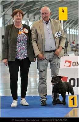 Forever First Domidar Dogs (Breno Domidar Dogs X Beretta Domidar z Hambalek Bušín) - Třída šampionů - psi - známka: výborný 1, CAC, res. CACIB