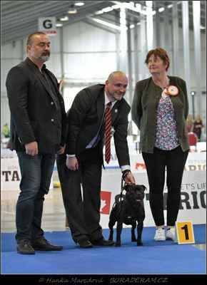 Hold Me Back Domidar Dogs (Decimus Prime Domidar Dogs X Maya Stawka Wieksza niz Zycie) - BOB, BIG III - 2. místo
