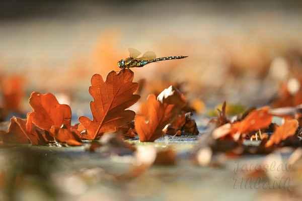 Je-li teplý podzim, pořídíme i takové snímky.