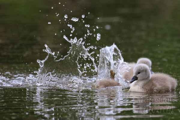 Od malička jsou velcí kamarádi s vodou, i když je studená.