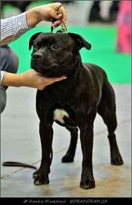 Keep Up With Domidar Dogs (Glimmer Man Domidar Dogs X Grinning Devils Domidar go Ballistic) - PSI - mezitřída - V1, CAC