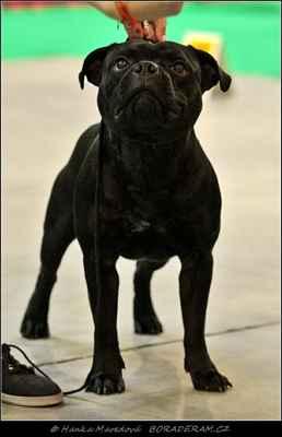 Jacques Boomer Black (Gendarme Diamond Chase X Monica Bellucci Diamond Chase) - PSI - třída šampionů - V 1, CAC
