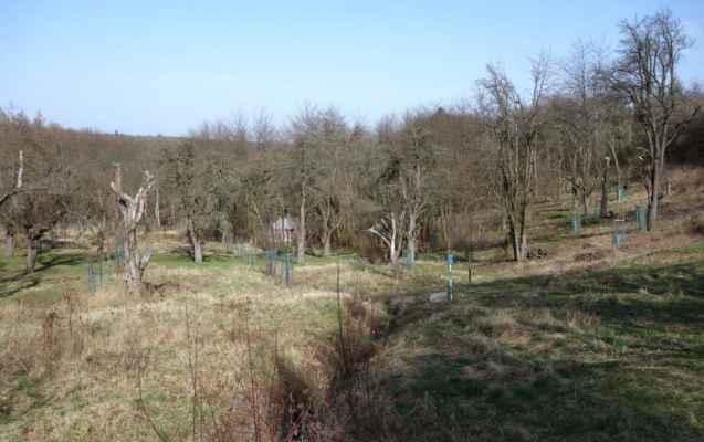 Je tu asi stovka stromů. Staré se postupně nahrazují novými stromy, tak třeba se tu jednou dočkáme i jablek :o)))